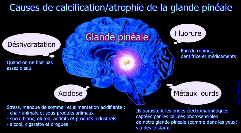 Glande pineale