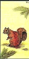 Oracle ge 34 l ecureuil